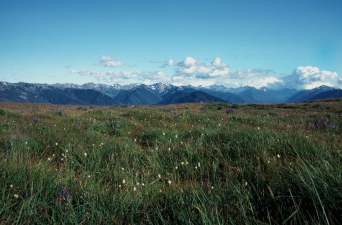 Wilderness_from_meadow_on_Hurricane_Ridge