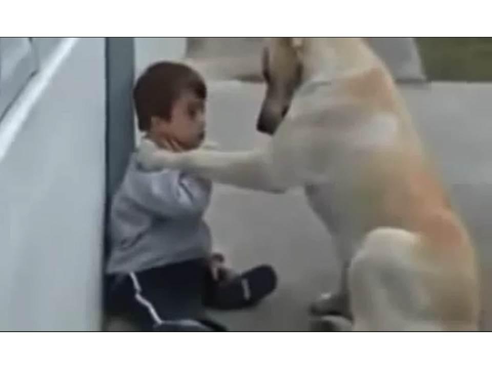 Dog & Boy 2