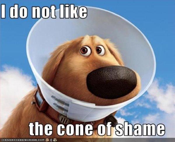 cone_of_shame