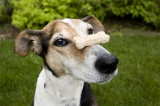 dogbone2